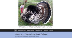 Phoenix Rare Breed Turkeys